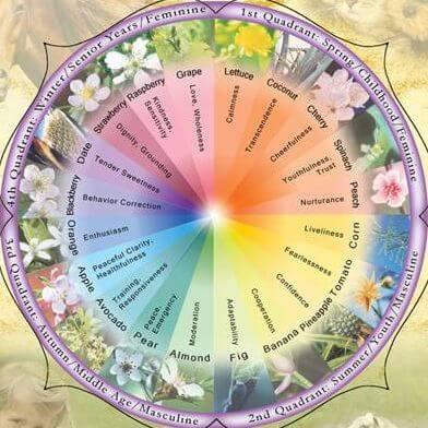essence-spectrum-chart